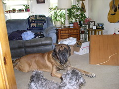 Sam and Coco