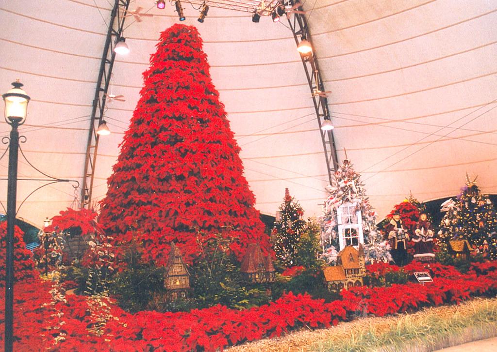 Cypress Gardens Poinsettia Christmas Tree Flickr Photo Sharing
