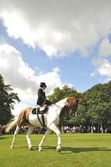 animal sports, equestrianism, english riding, eventing, dressage, stallion, equestrian sport, sports, recreation, outdoor recreation, horse,