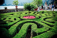 annual plant, shrub, flower, garden, maze, labyrinth, green,