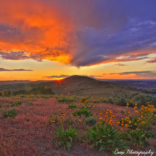 flowers sunset wild sky panorama orange mountain vertical photography washington nikon little pano badger wa coop wildflowers hdr kennewick d90 richlad