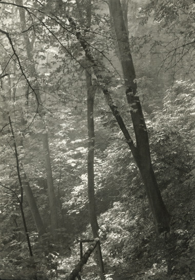 Stag's Moat (Study of Trees), by Josef Sudek 1946