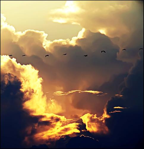 sunset pelicans silhouette clouds evening gulfcoast bolivarpeninsula cauldon
