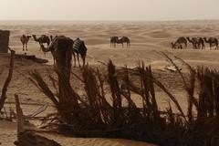 Qibili, Tunisie - La porte du désert ?