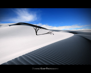 The Lonely Dune