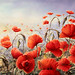 A Dash of scarlet on a Steel Dawn ! by BILBOV.(Lorus Maver)