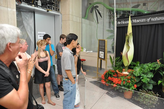 Houston Museum Of Natural Science Butterfly Corpse Plant