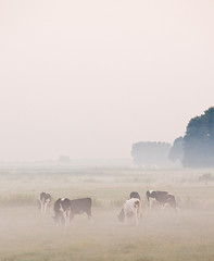 cattle-like mammal, prairie, fog, steppe, horizon, field, plain, haze, herd, natural environment, morning, landscape, cattle, pasture, rural area, grassland, mist, dust,