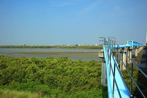 12Q4朴子溪生態-紅樹林-自來水管橋