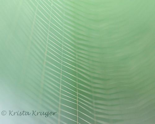 Fine Lines by Krista Kruger