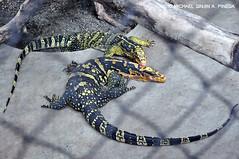 Guangzhou Crocodile Park