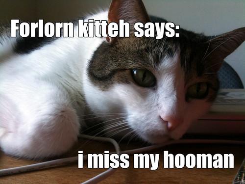 Forlorn kitteh