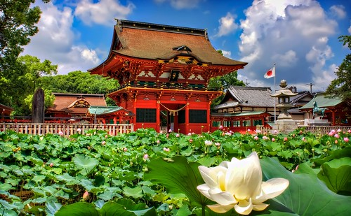 Iga Hachiman Shrine and Lotuses