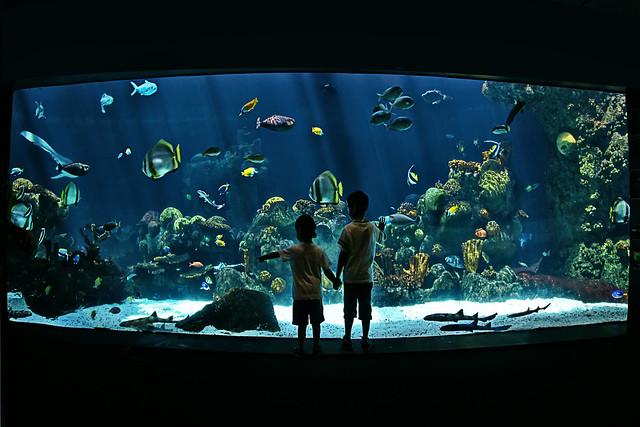 Fish Aquarium Minneapolis Skyline Aquarium Middle C
