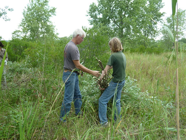Patrick Dougherty and his son Sam harvest invasive willow saplings. Photo by Elizabeth Peters.