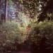 South Bohemian forest by Jana Makroczy // photography