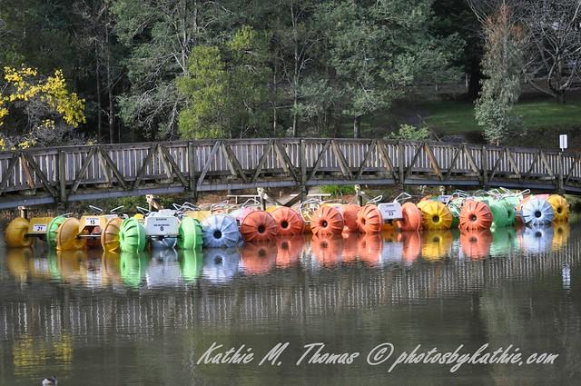 Bridge and paddle boats
