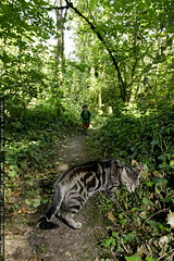 walking in the woods with our kitten