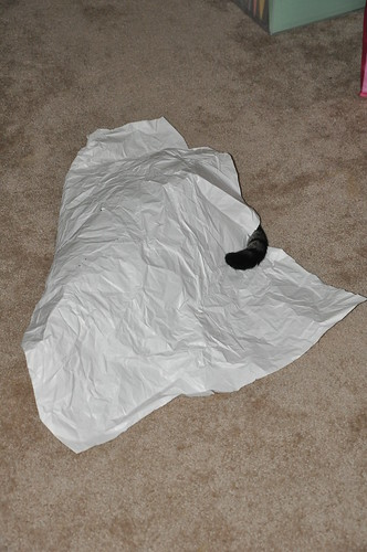 Hiding cat, Crinkled paper