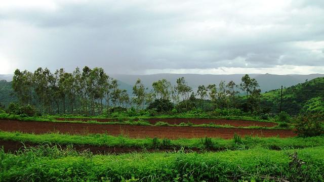 Dhom Dam bihind trees