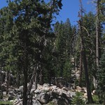 Sequoia NF, Sherman Pass Rd 3181a