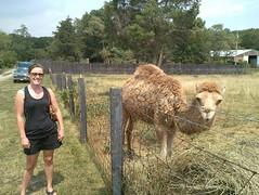 camel +alexa