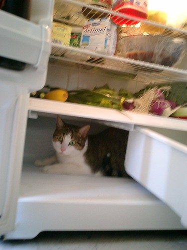 you never put the cheese in the refrigerator, because you don't put your cat in the refrigerator