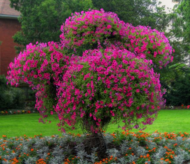 Как сделать дерево из петуньи