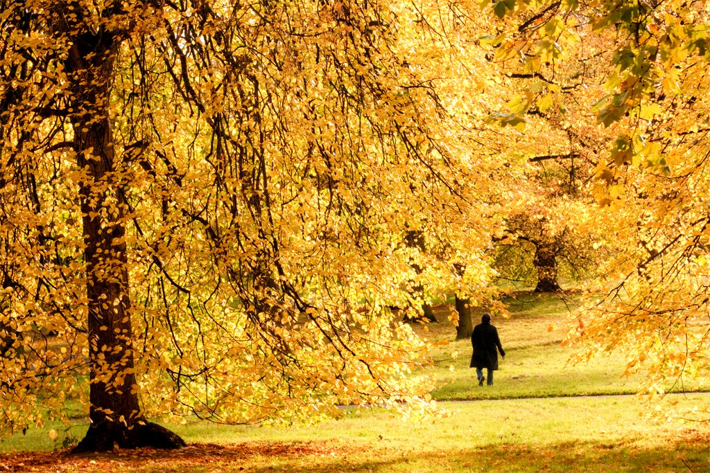 Hyde Park Autumn Autumn Stroll in Hyde Park