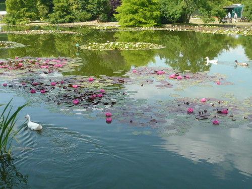 Buying Garden Ponds Fit For Water Lilies Gardening Products
