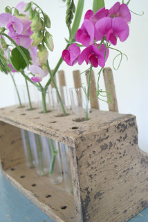 test tube sweet peas