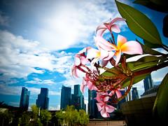 Flowery City