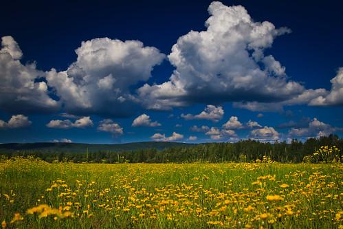 flowers sky field alaska clouds fairbanks dcumminsusa dcummins canoneos7dimg6869