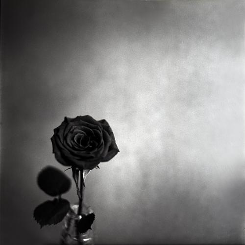 *Rose