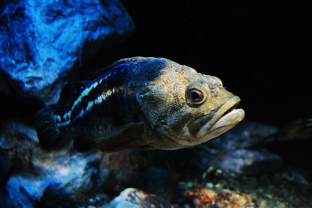 Photo:OTARU Aquarium. By MIKI Yoshihito. (#mikiyoshihito)