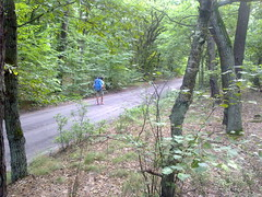 A hiker walking through Kampinos National Park