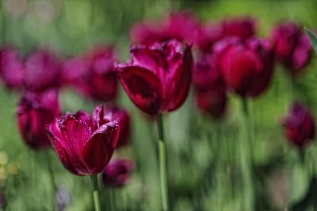 Flowers w 85mm f/1.4