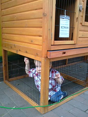 wood, cage,