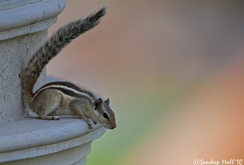 squirrel bugz canoneos50d sandeepmall sandsminoo canon600f4