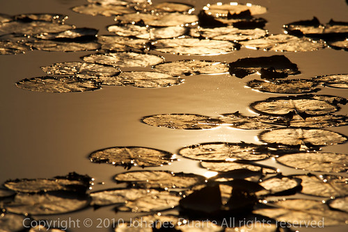 sunset folhas água ma golden yo ouro enniomorricone violoncelo