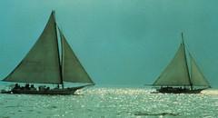 sail, sailboat, vehicle, sailing, ship, mast, watercraft, scow, boat,