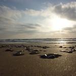 חוף דדו דרום