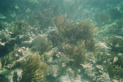 algae(0.0), shoal(0.0), coral reef(1.0), coral(1.0), seaweed(1.0), coral reef fish(1.0), sea(1.0), ocean(1.0), marine biology(1.0), natural environment(1.0), underwater(1.0), reef(1.0),