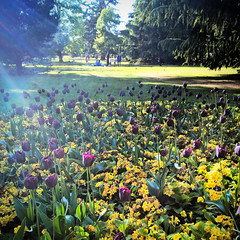 Flower Beds and Lawns