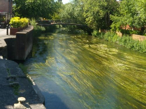 The Avon through Salisbury