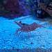 Small photo of Shrimp