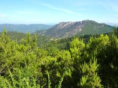 Sentier de montée Sud depuis Giannucciu : vue vers Giannucciu et la zone incendiée