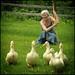 Lynnette and her Ducks by Lynnette Henderson