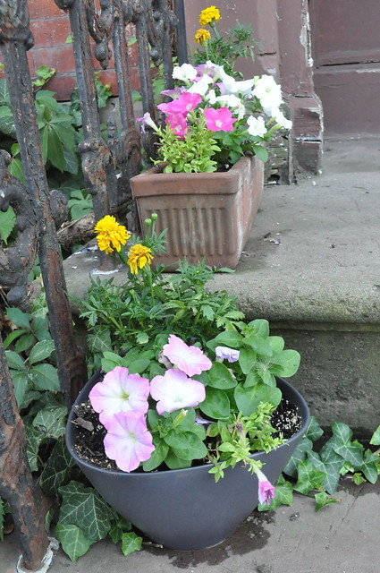 marigolds and petunias