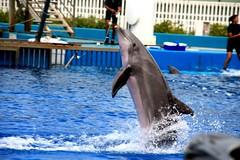 whale(0.0), killer whale(0.0), animal(1.0), marine mammal(1.0), common bottlenose dolphin(1.0), marine biology(1.0), short-beaked common dolphin(1.0), dolphin(1.0),